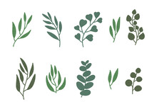 Set Of Eucalyptus Leaves, Textured Tree Branch, Green Color Illustration Isolated On White. Vector