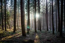 Wald Bäume Sonnenschein Sonnenlicht Natur Strahlen