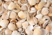 Sea Shells Macro Image With High Resolution