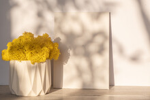 Mock Up Of An Empty White Canvas In Sunlight. Yellow Moss In A Concrete Planter. Shadow Plant Pattern On A White Wall. Home Design.. Minimalism And Copy Space