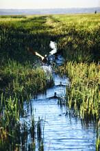 Marshland At Bamurru Plains
