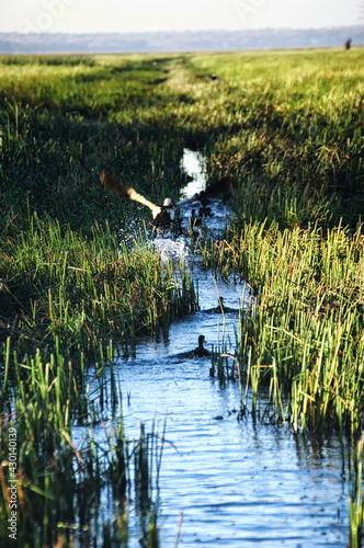 Fotografie, Obraz Marshland at Bamurru Plains