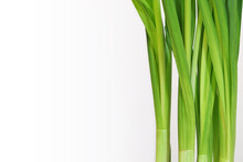 Green Fresh Daffodil Stems And Leaves On White Background. Vertical Plant Leaves. Light Green Growing Herb. Place For Your Text Here. Blank For Business Card Or Banner.