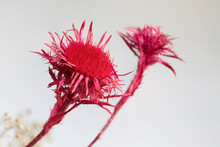 Beautiful Dry Flowers On A Light Background. Dry Plants.