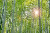 瑞々しい新緑の竹林