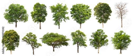 Obraz na plátně tree collectoin isolate on white background