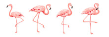 Set Of Differents Flamingo On White Background.