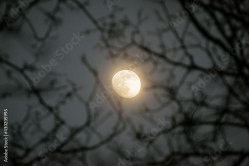 Świetlisty księżyc w pełni pomiędzy gałęziami - fototapety na wymiar