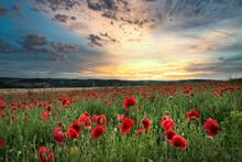 Stunning Poppy Field Landscape In Summer Sunset Light