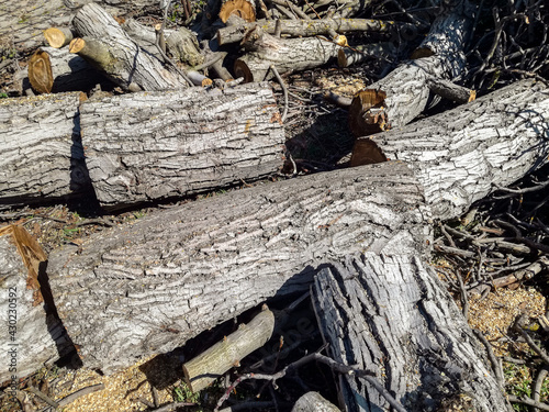 Canvas Print Trunk of old walnut tree, sawn into pieces