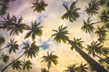 Palm Trees Seen From Below With Colorful Sky