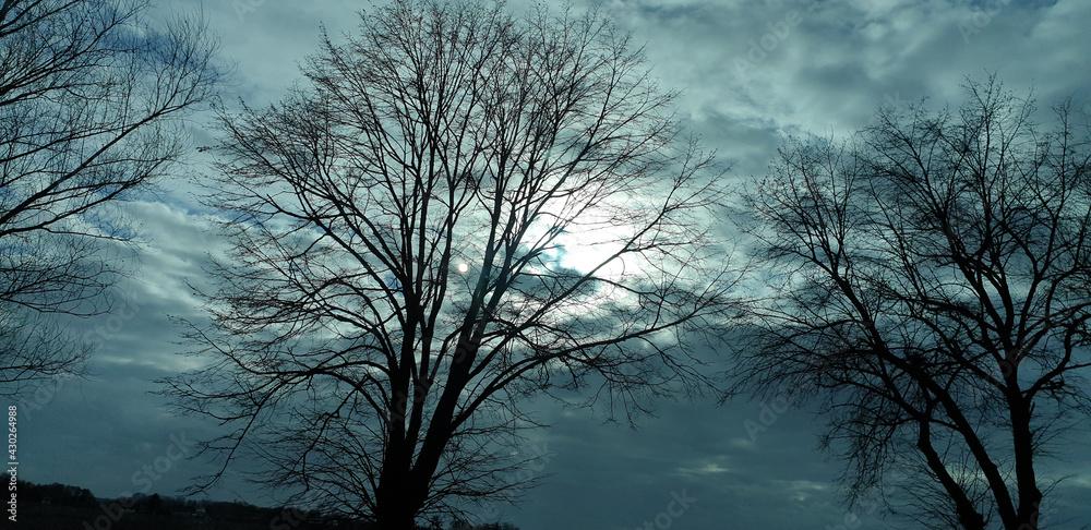 Krajobraz. Drzewa. Słońce za chmurami. Zmrok.