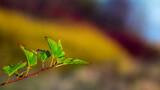 Fototapeta Tęcza - Gałązka rośliny na tle kolorowych krzewów