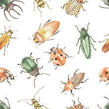 Watercolor Seamless Pattern With Beetles, Rhinoceros Beetle, Ladybug, Colorado Beetle On White Background