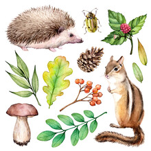 Watercolor Forest Elements Set. Illustration On White Background With Hedgehogs, Chipmunk, Beetle, Mushroom And Leaves.