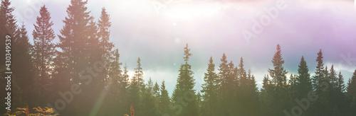 Mountains forest Fototapeta