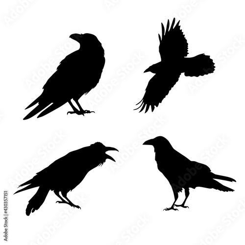 Slika na platnu Vector silhouette of a crow