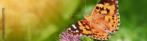 Fotografija A butterfly sits on a flower of burdock on a sunny summer day banner panoramic