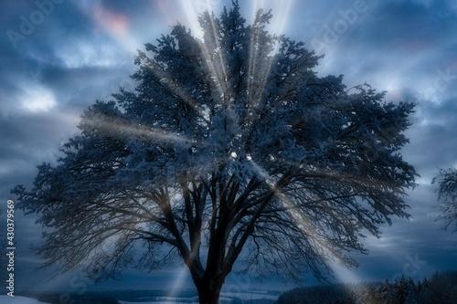 Papel de parede symbole de lumière divine derrière un arbre en hiver