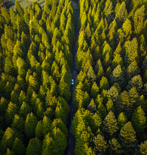 Aerial View Of A Car Driving A Road Crossing The Forest, Chão Das Feiteiras, Madeira Island.