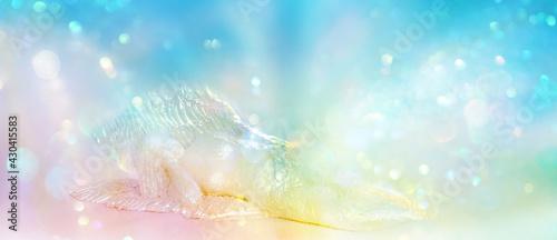 Fotografia Liegender Engel in irisierenden Farben, entspannt eingebettet in ein strahlendes