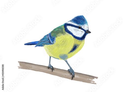 Obraz na plátně Blaumeise, Blue tit