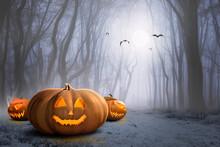 Halloween Pumpkin On A Orange Background , Background Orange Halloween In Forest