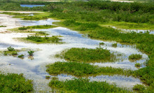 Marsh Wetlands Landscape