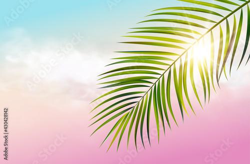 Green leaf of palm tree on white background - fototapety na wymiar