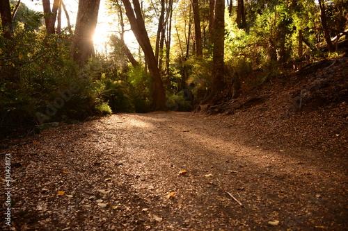 Camino cubierto de hojas en el bosque, Bariloche, Argentina Fototapet
