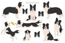Border Collie Clipart. Different Poses, Coat Colors Set