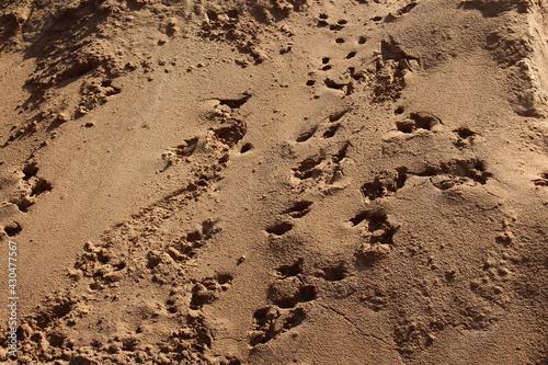 Billede på lærred Sand gelb