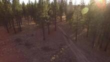 Dirt Bike Riding On Desert Trail Through Trees And Sage Brush. Bend Oregon