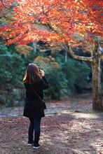 Young Woman Traveler Taking A Photograph Beautiful Autumn In Japan.