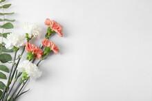 Fresh Carnation Flowers On White Background