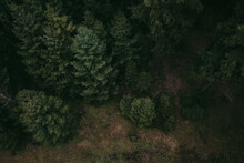 Mystic Moody Forrest From Above