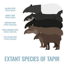 Extant Species Of Tapirs (Tapiridae) - Side View - Flat Vector