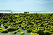 Beach With Green Algae Near Shimendong In Shimen District, New Taipei City, Taiwan