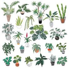 Tropical  Jungle Houseplants Set.