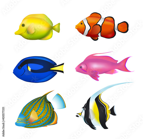 Fotografering Tropical Fishes Set