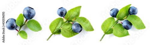 Tela Bilberry isolated