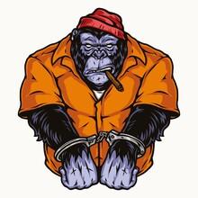 Handcuffed Gorilla In Orange Prisoner Uniform