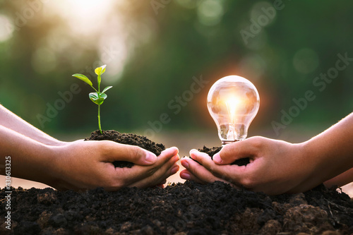 hand holding young plant and ligh bulb. concept saving energy. eco earth day - fototapety na wymiar