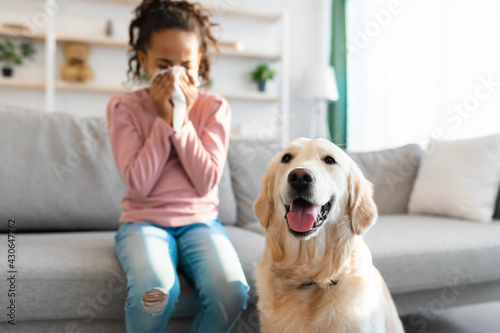 Fototapeta Dog Allergy. African American girl sneezing, suffering from nasal congestion obraz