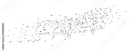 Valokuva A flock of flying birds. Vector illustration