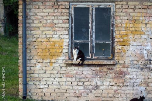 Czarno-biały kot siedzący na parapecie starego drewnianego okna #430672943
