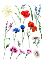 Set Of Wild Flowers Poppy, Cornflower, Chamomile, Tansy, Carnation, Lulu Herbs, Leaves And Buds. Hand Drawn Watercolor Isolated Elements On White Background For Design Of Cards, Wedding Invitations.