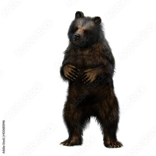 Fotografie, Tablou 3D illustration of a grizzly bear standing on hind legs isolated on white