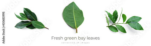 Fotografia Fresh green bay leaves isolated on a white background
