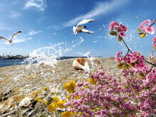 Seagull  Flight And Seashell On Stone At Beach Sea Water Splash Wild Flowers Pink And Yellow  Harbor Blue Sky And Ocean Nature Landscape